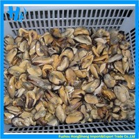 Frozen blue mussel meat for sale