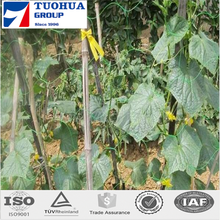 Agriculture plant support net providing the crops with lateral support