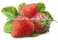 Freeze Dried Strawberry Powder KOSHER & HALAL