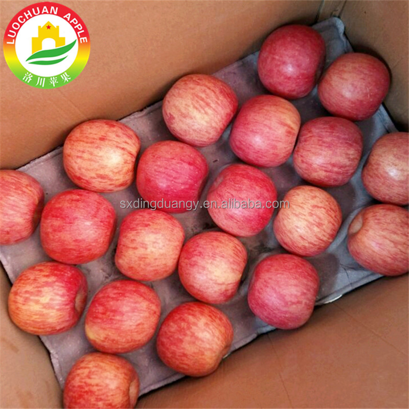 80# AAA Best Price Fresh Apple Fruits China Fuji Apple Supplier