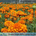 Feed grade Marigold extract Lutein 2% 3% 4% HPLC