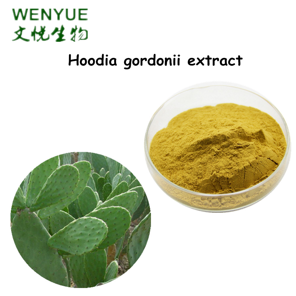 Hoodia gordonii extract 3:1 for weight loss slimming in bulk