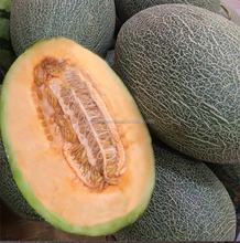 Hybrid green skin(Cucumis melo) sweet melon seeds for planting Hami melon seeds