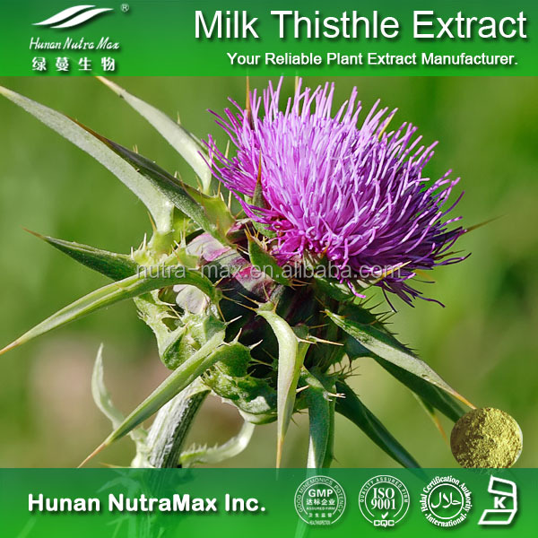Natural Pharmaceutical Ingredient Milk Thistle Extract/Silybum Marianum Oil