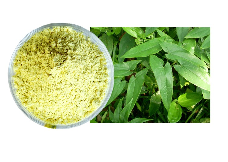 HACCP Certified Factory Supply Epimedium Extract Icariin 80 98