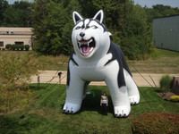 giant inflatable wolf dog