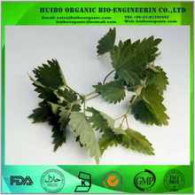 Nettle Extract Beta Sitosterol
