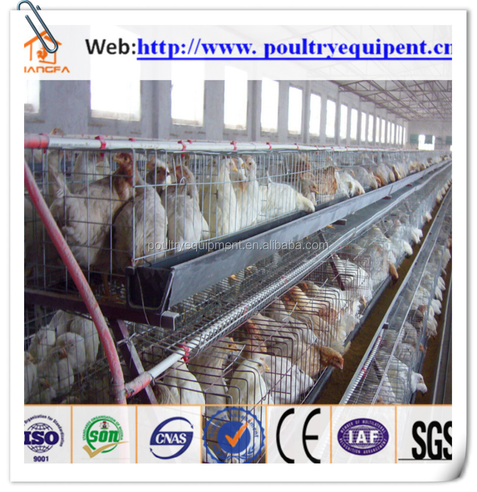 High quality chicken farming for sale