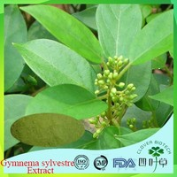 Hot selling gymnema sylvestre / gymnema / gudmar from india with low price