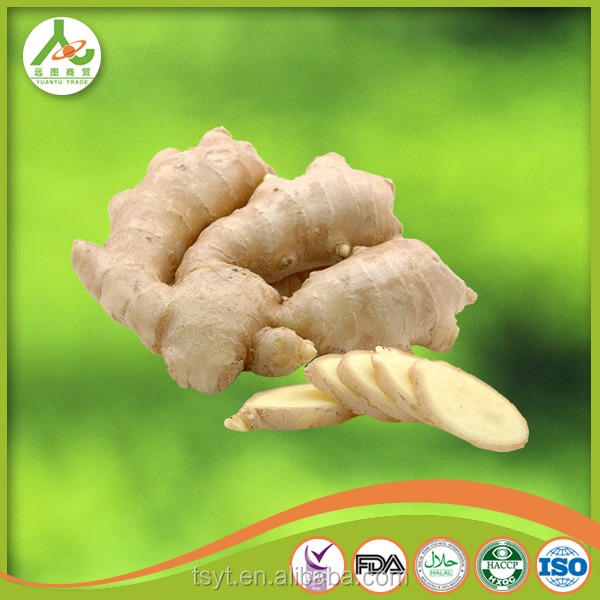 China fresh ginger competitive supplier 2014 new season