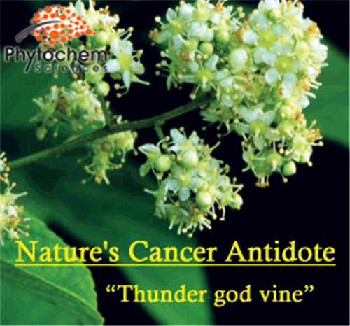 Anti-cancer chinese herbs Thunder god vine Extract