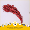 Red color chilli pods Henan Sunny brand