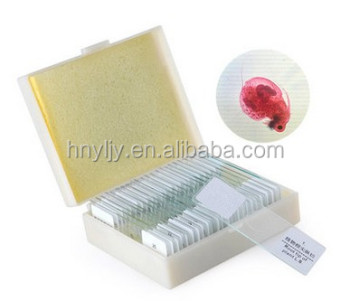 factory histology prepared slides of human being