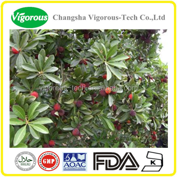 Chinese manufacture provide Bayberry Extract/Myrica rubra powder/Myricitrin