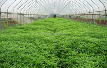 galvanized steel garden green house