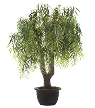 0006 yiwu willow for indoor hall decoration (200cm height)