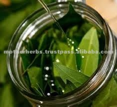 100% Pure Bay Leaf Oil Extract