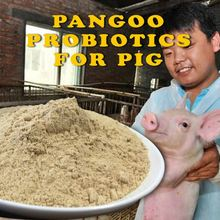 Piglet(Piglets) probiotics nutrition facts