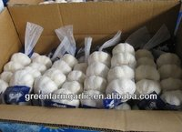 Jinxiang Normal/Pure White Garlic