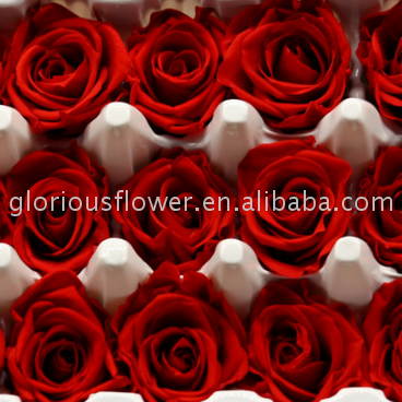 Factory wholesale High Quality Rose Preserved Fresh Flower preserved flower with Mixed Color