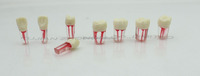 Root Canal and Crown S12/Opening of the pulp chamber model/Root canal filling model/dental teeth model