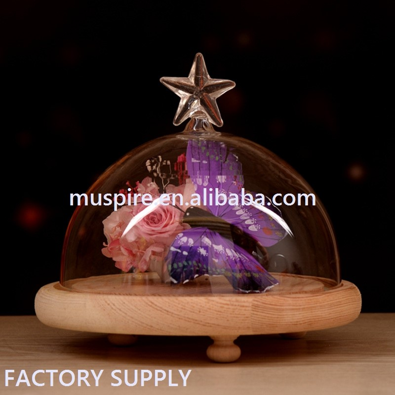 Stars shape Transparent Clear Glass Dome