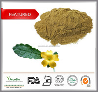 Huge Discount!!! Natural Damiana extract in bulk supply,Damiana leaf extract powder