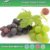 Natural antioxidants Grape Seed P.E. 95% Proanthocyanidins; grape seed extract from cGMP manufacturer