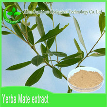 Top quality Natural Yerba mate extract 10:1/supply Yerba Mate Plant Extract in chinese Manufacturer