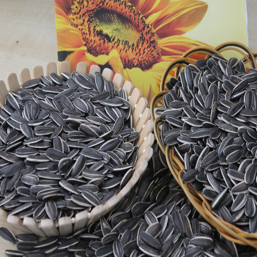 Chinese sunflower seeds 5009 Long shape 270PCS/50G