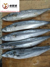Top Quality Frozen Spanish Mackerel fish for sale