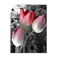 Wholesale Black and White Lotus Picture Canvas Prints Fashion Digital Printing Artwork for Living Room Decoration