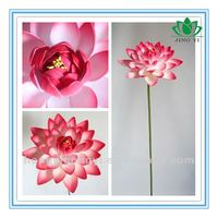 colorful and beautiful single lotus flower