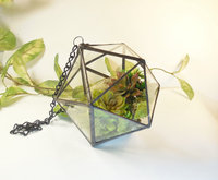 Hanging and Geometric Glass Terrarium