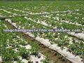 PE plastic film for greenhouse/mulch/agriculture