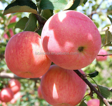apple fresh Fuji apple wholesale prices apple fruit