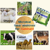 LS-04 PANGOO , microbial feed additives for ruminant , such as for Cow , Cattle, Sheep, Giraffe, Camel
