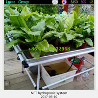 Hot Sell Good Quality Hydroponic Growing