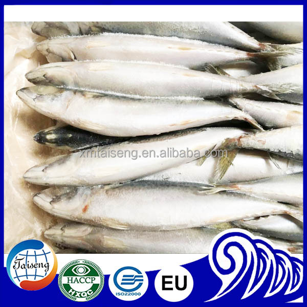 Scientific Name of Frozen Whole Mackerel Fish On Sale