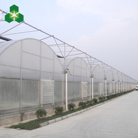 Hot Sell Greenhouse Technology For Agriculture