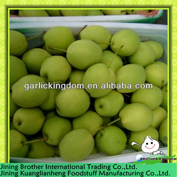 China shandong green pear