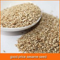 sesame seed for bakery shops