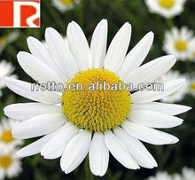 factory top quality Chamomile powder extract with Apigenin(YANG GAN JU )