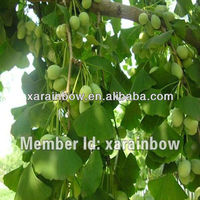high quality of Ginkgo Biloba Leaf Extract (CP2005(24%/6%HPLC)/Ginkgo Biloba Extract