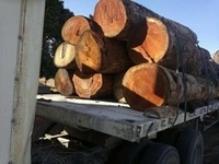 Doussie Logs and sawn timber