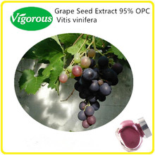 natural 95% grape seed OPC / Grape seed extract powder , 95% grape seed extract