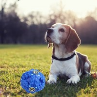 PET DOG GIGGLE BALL TOUGH TREAT TRAINING CHEW SOUND ACTIVITY TOY SQUEAKY