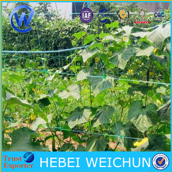 150x170mm PP trellis netting tomato support net cucumber climbing mesh plastic pea and bean net for sale
