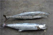 High Quality Seafood Frozen Round Whole Spanish Mackerel