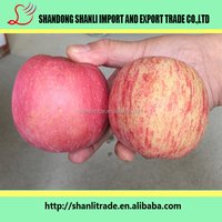 Scientific name of all fruits red fuji apple wholesale market price